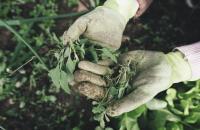 Tips & tricks: verwijderen van onkruid tussen tegels en in het gazon