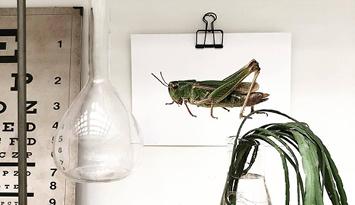Schilderijen & foto's