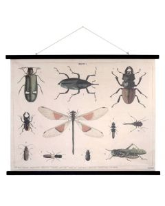 Wandkaart insecten printed xl