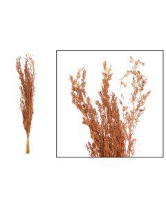 Alfonso grass 100cm 100gr Terra cotta