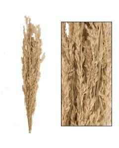 Alfonso grass 100cm 100gr Natural