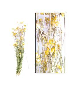 Lona 49.5x14.5x8.5cm Yellow