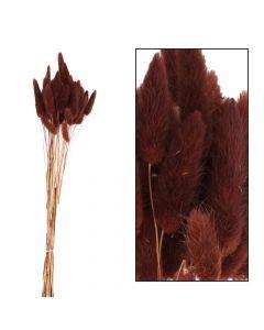 Lagarus bundle 35pc 45-50cm Brown