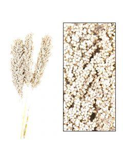 Indian corn 70cm 3pc poly White-wash